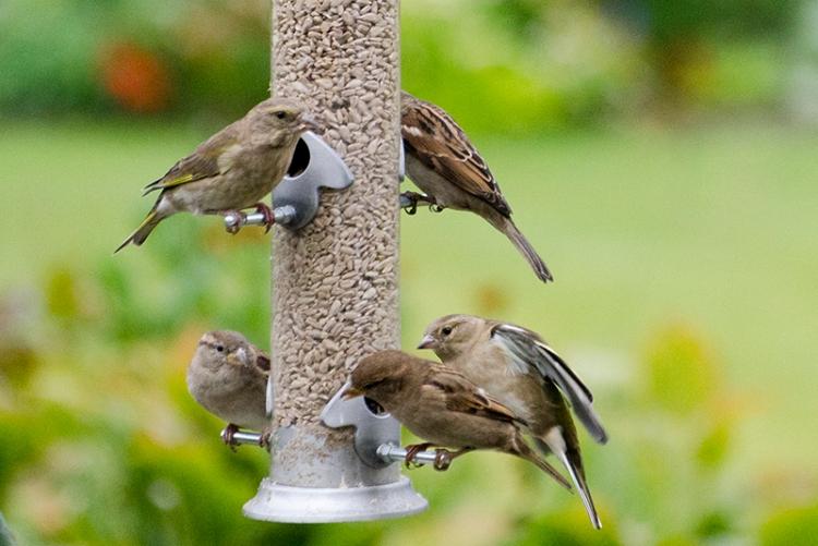 busy feedr