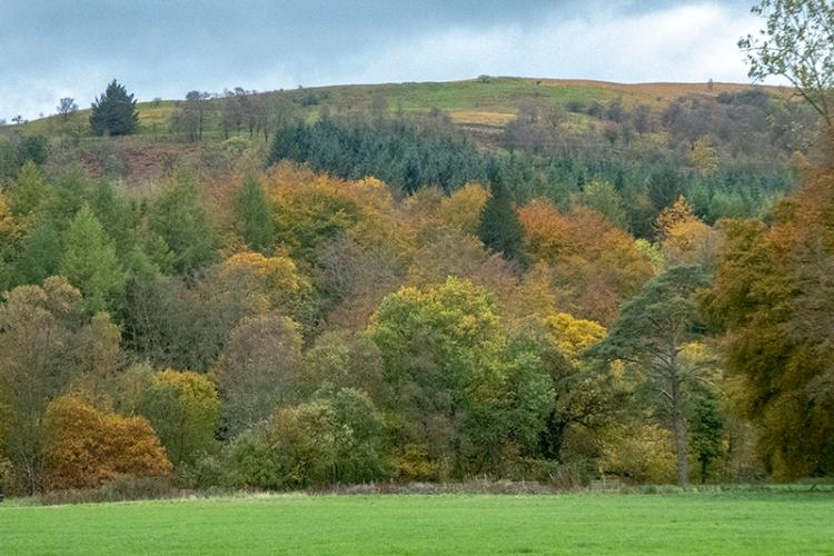 castleholm trees oct (2)