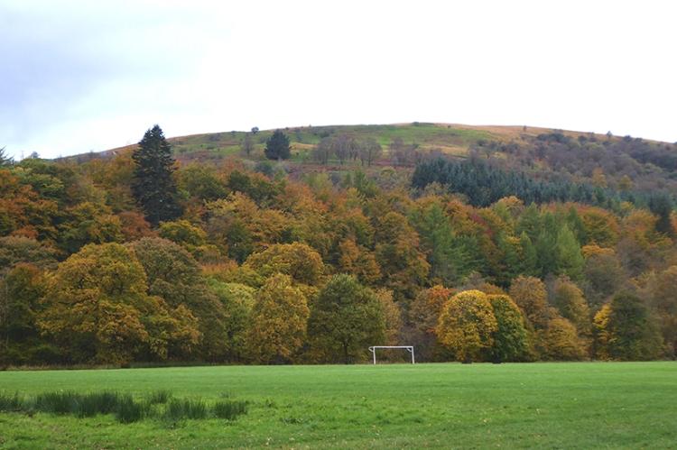Castleholm trees oct