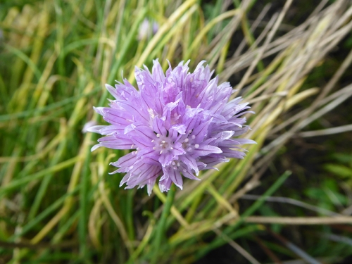 chives october