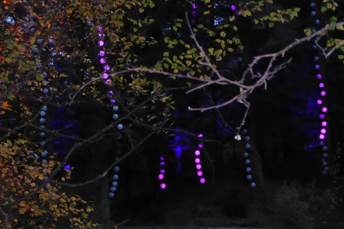 enchanted forest1