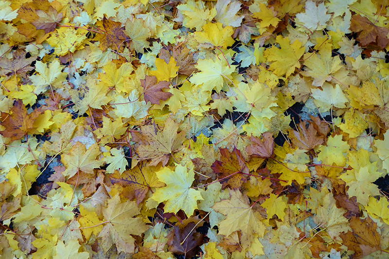 fallen leaves beside Esk on street
