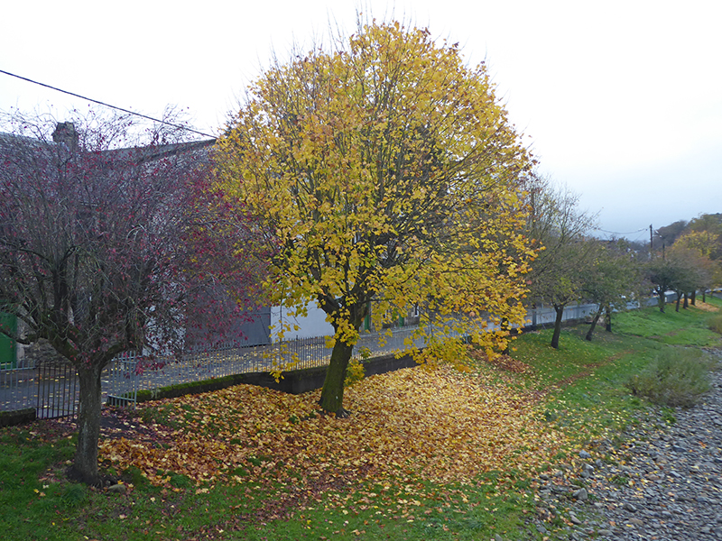 fallen leaves beside Esk