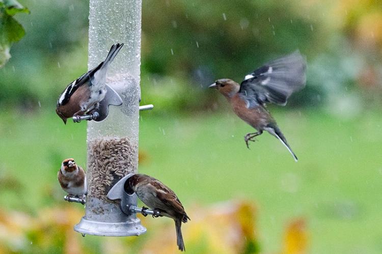 feeder in the rain