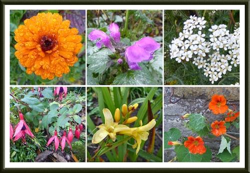 garden flower panel oct 20