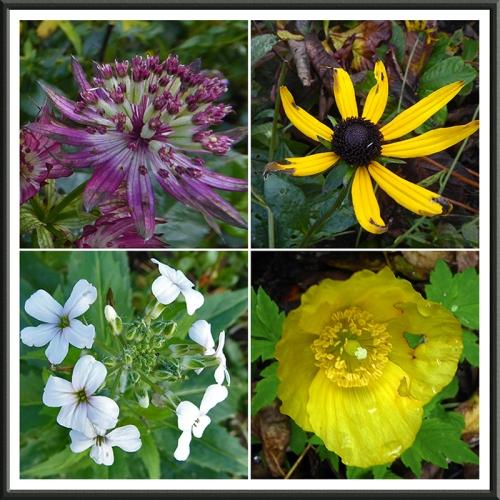 garden flowers 22 OcT 2