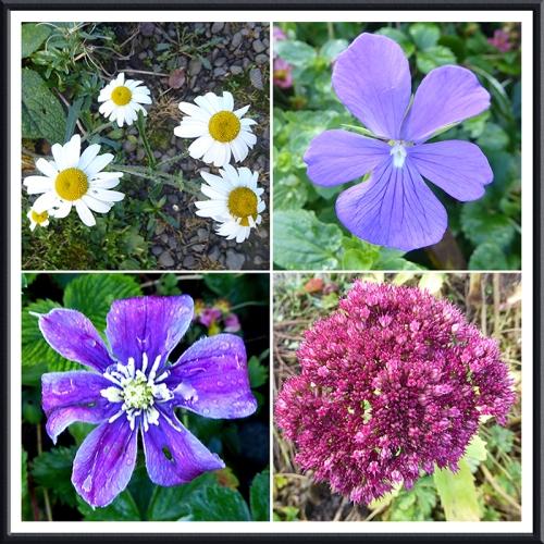 garden flowers 22 OcT