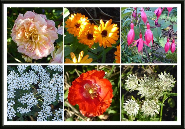 garden flowers Oct 15
