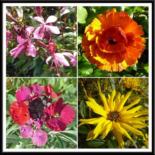 late garden flowers