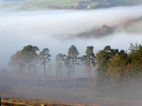 misty trees hillhead
