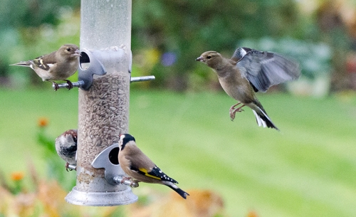mixed feeder