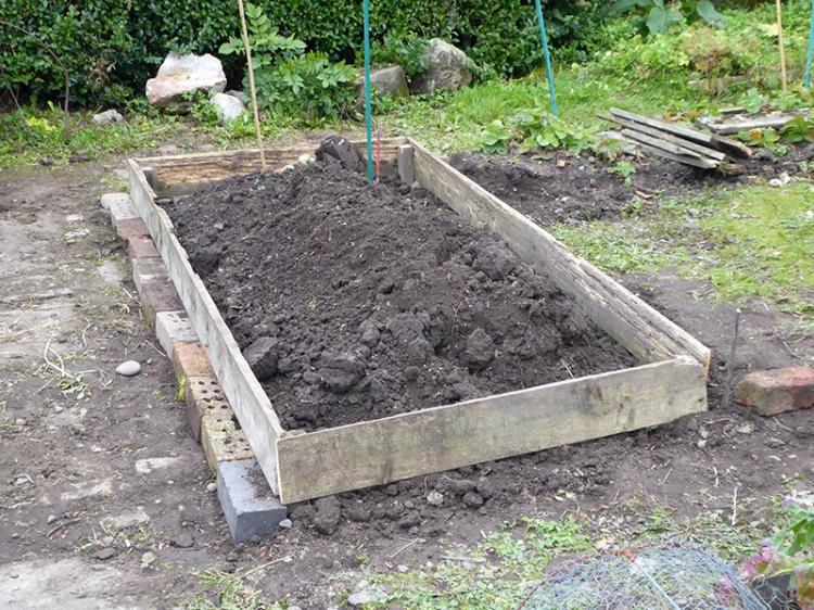 new bed back veg