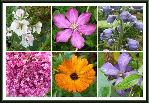Octcober flowers