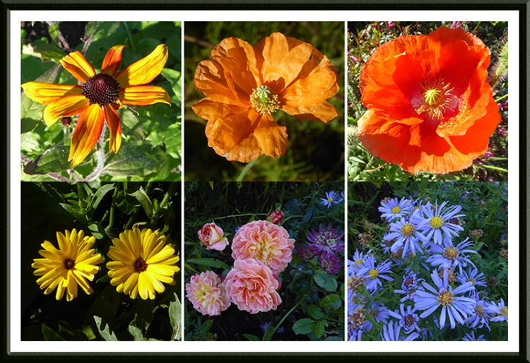october flowers in the sun