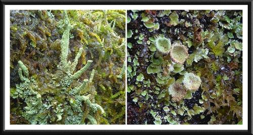 park wall lichen panel