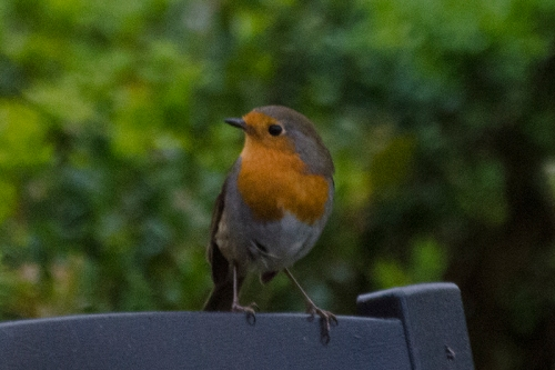 robin on seat