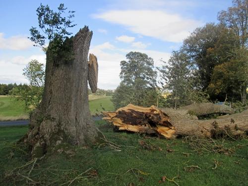roxburghe tree snap
