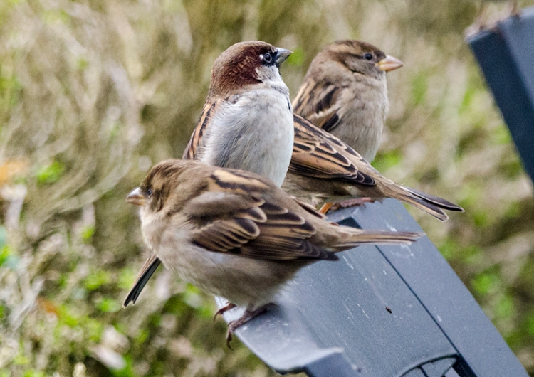 sparrows on chair