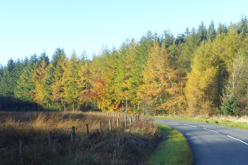 The wauchope road in autumn