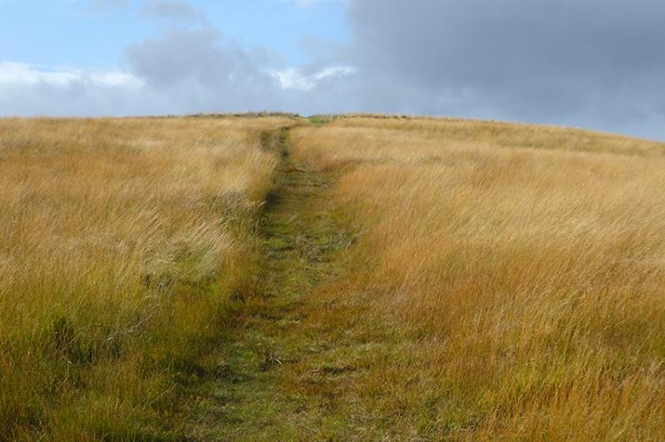 track on Meikleholm Hill