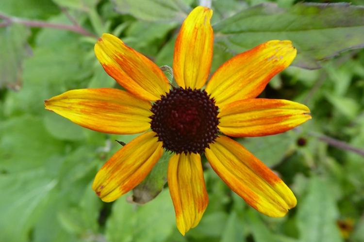 veg garden flower