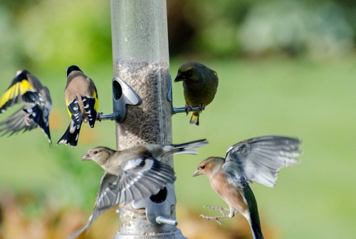 vert busy feeder