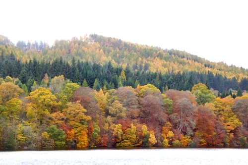 View from Pitlochry dam