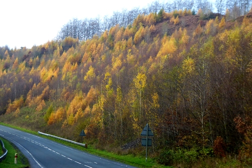A7 autumn colour