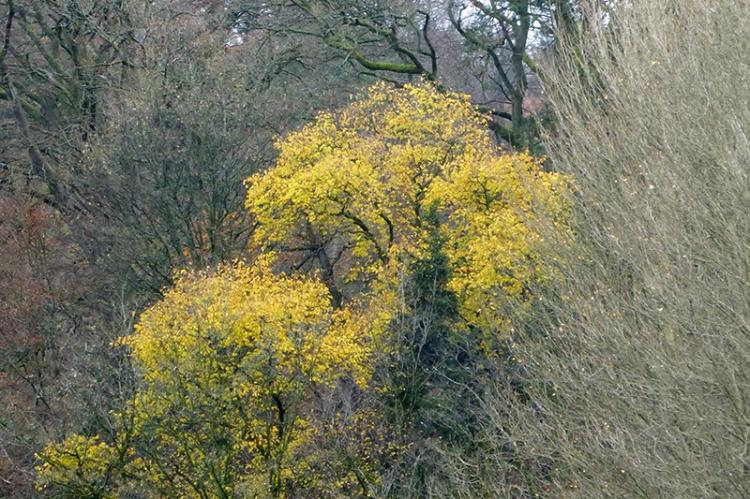 autumn colour November