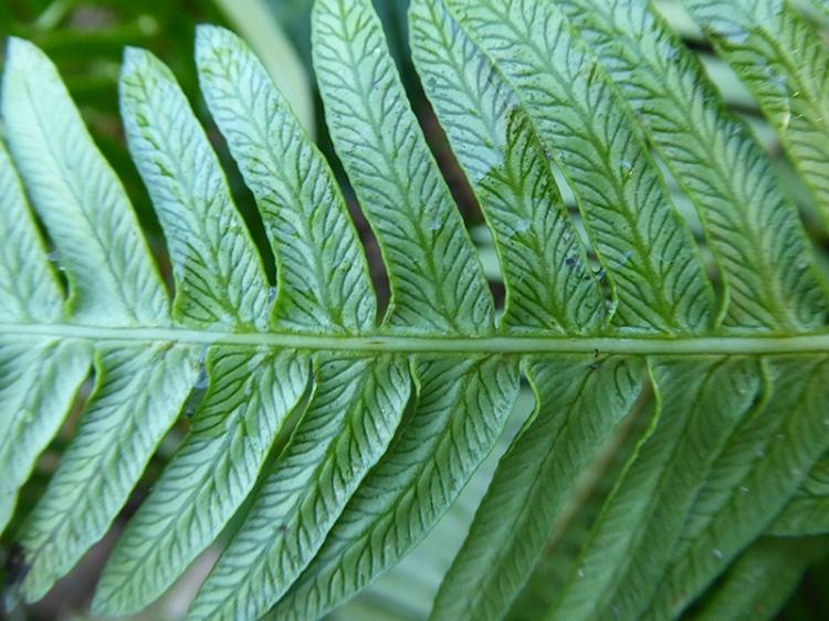 back of a fern