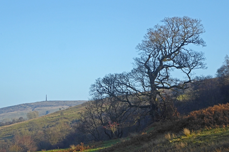 bare tree and monument