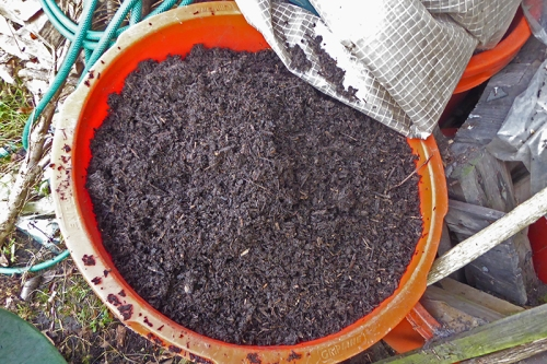 bucket of sieved compost
