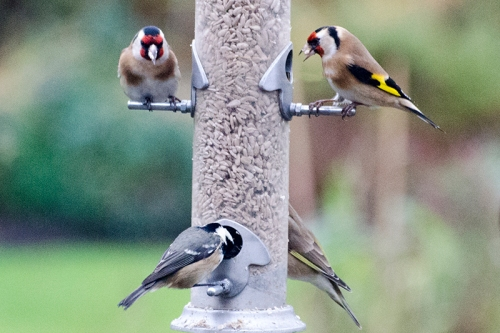 busy feeder again