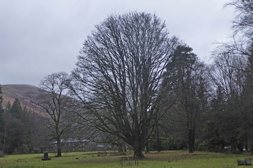 castleholm bare tree