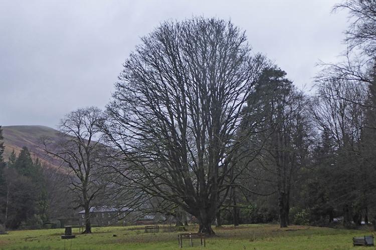 castleholm bare tree