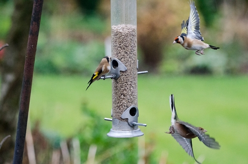 coming and going at the feeder