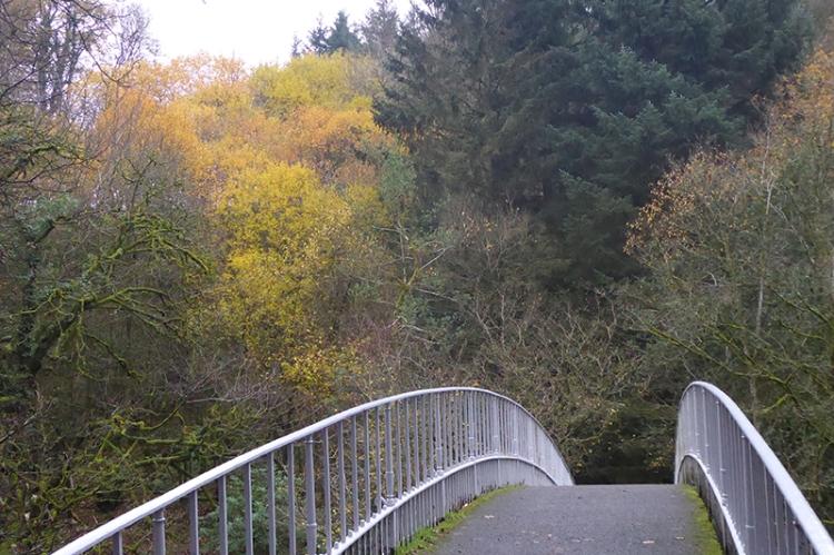 duchess bridge tree