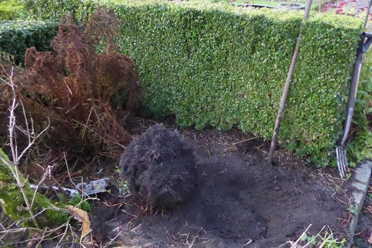 fern dug up