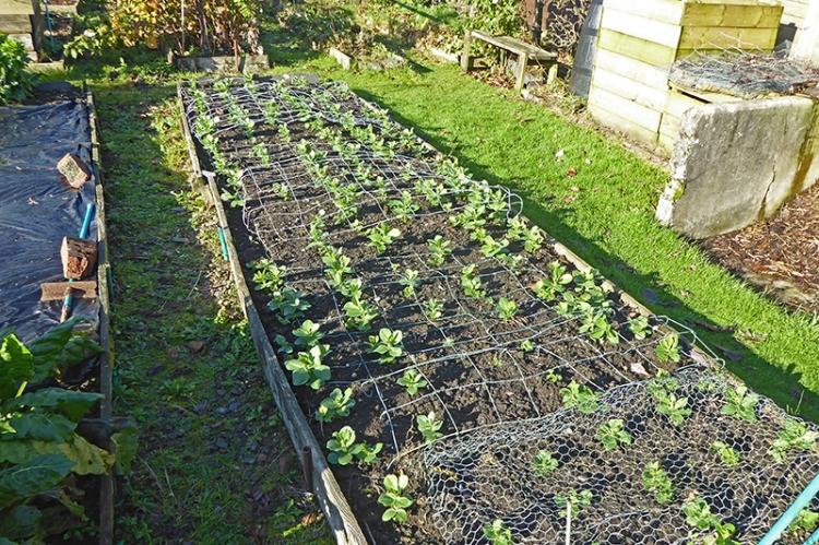 field beans Nov