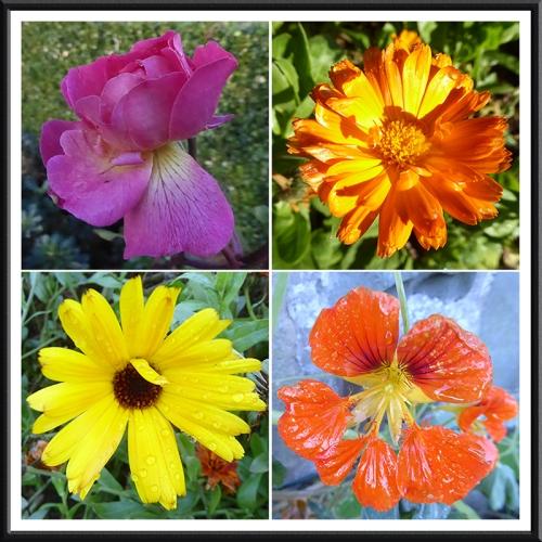 four flowers November 1