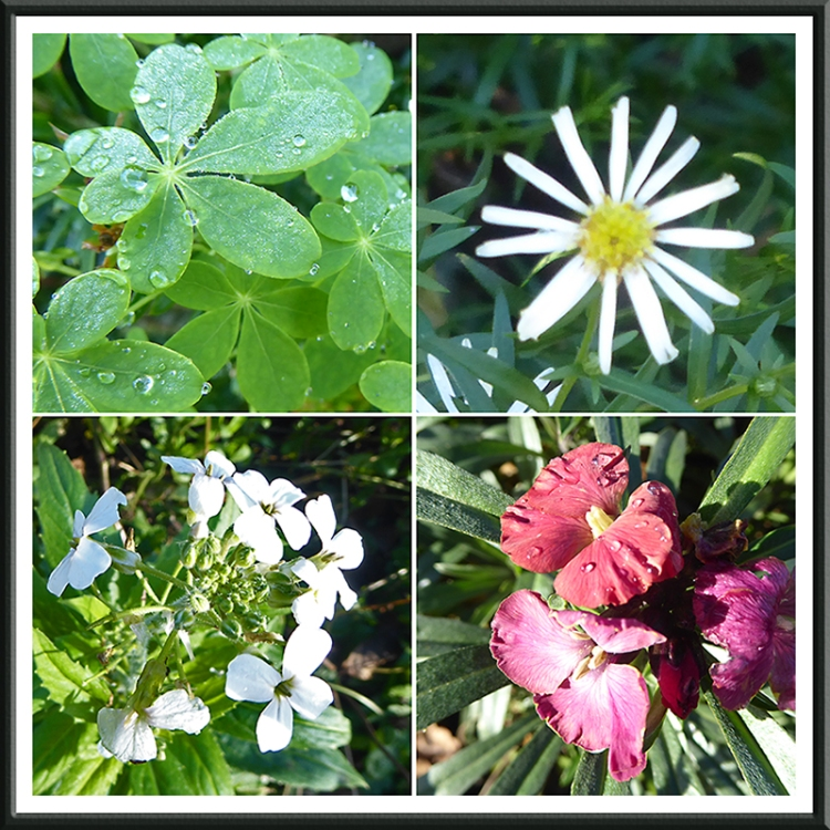 four flowers November 2
