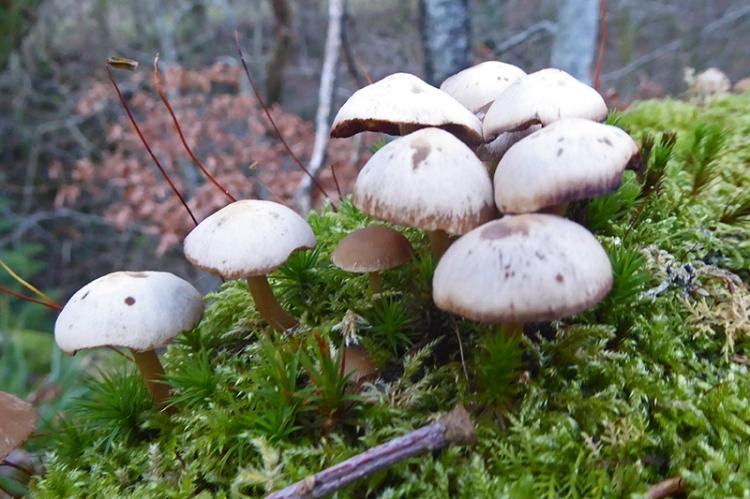 fungus and moss