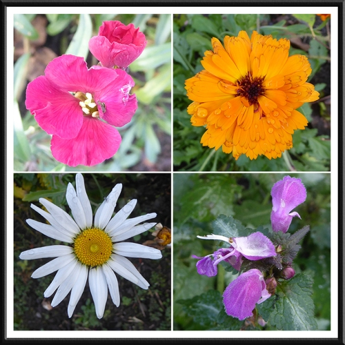 garden flowers november