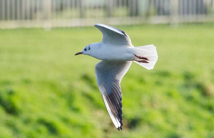 gull above ewes water