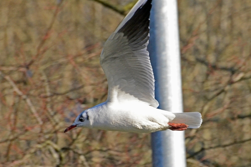gull and lampost