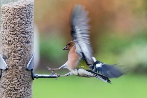 handbrake turn chaffinch