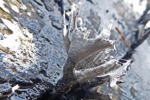 lichen by riverside