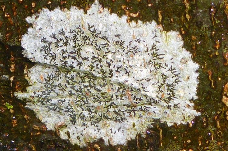 lodge walks lichen
