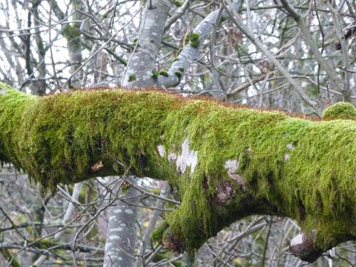 moss on tree branch
