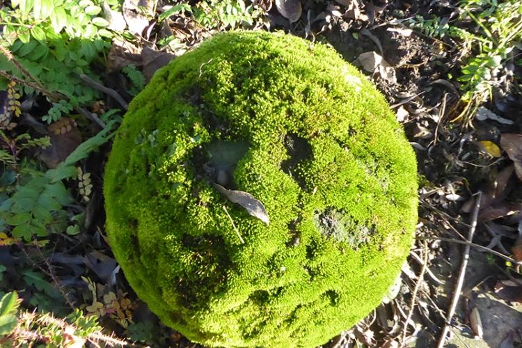 mossy stone ball